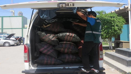 Detectan nuevas modalidades de tráfico de carbón de algarrobo en Lambayeque