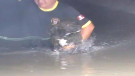 Serenos rescatan a perro de aguas en acequia Yortuque