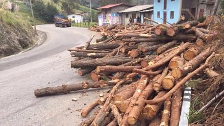 Cajamarca: troncos caen en plena carretera