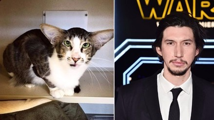 Twitter: aparece un gato indéntico a Kylo Ren de Star Wars (FOTOS)