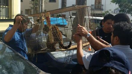 Flagrancia: sentencian por primera vez a autores de tráfico ilegal de animales