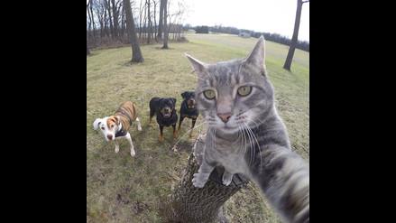 Facebook: Este gato ha aprendido a tomarse selfies