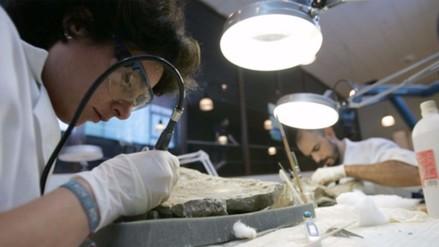 Científicos hallan fósil de dinosaurio en India