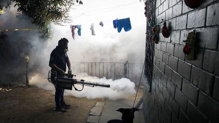 Zika: OMS no recomienda medidas específicas para evitar contagio