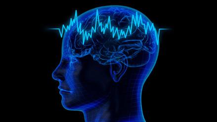 La actividad cerebral de los humanos está vinculada a la forma del cerebro
