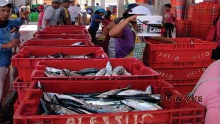 Pescadores de Puerto Eten recogen diariamente 10 toneladas de pescado