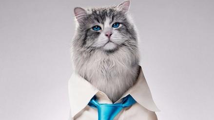 Kevin Spacey se transforma en gato en su nuevo filme