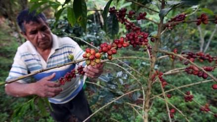 Más de 10 mil productores del norte fueron beneficiados por Sierra Exportadora