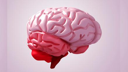 Crean réplica 3D del cerebro humano que facilitará estudios científicos