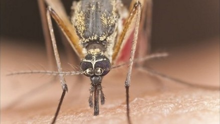La Libertad registra un caso importado de Chikungunya