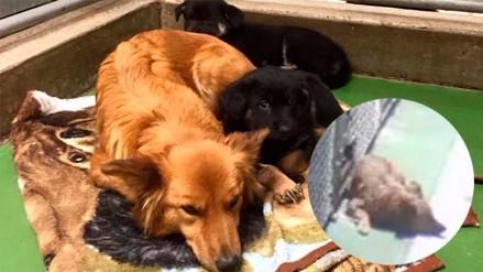 Facebook  perro se escapó de jaula para consolar a unos cachorros 52ac2580feb
