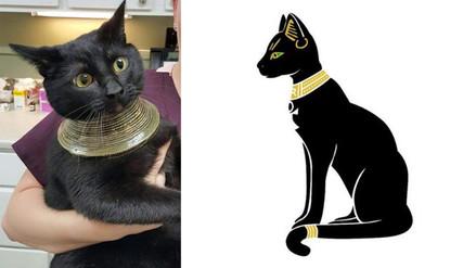 Reddit: gato metió su cabeza en un jarrón y ahora su aspecto causa sensación