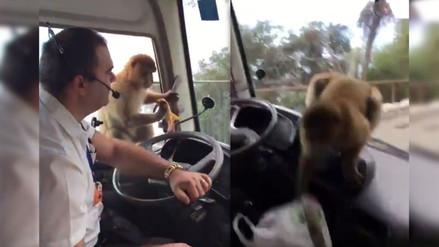 YouTube: mono se gana la confianza de un conductor y luego le roba el almuerzo