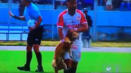 YouTube: jugador de UTC sacó cargando del campo a un travieso perro