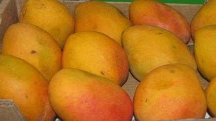 Crece exportación de frutas frescas de Lambayeque