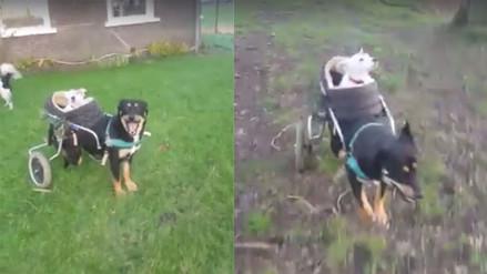 Facebook: la amistad de estos dos perros discapacitados conmueve en la red
