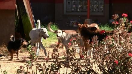 Detectan dos canes con rabia en Cerro Colorado