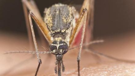 ¿Qué tienen en común el zika, el chikungunya y el dengue?