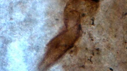 Hallan en Argentina un yacimiento de fósiles de unos 140 millones de años