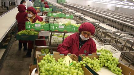 La uva fue la principal agroexportación no tradicional el 2015