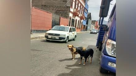Centro de Lima: perros callejeros muerden a vecinos y transeúntes