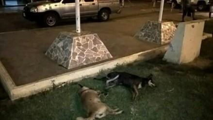 Trujillo: denuncian matanza de canes