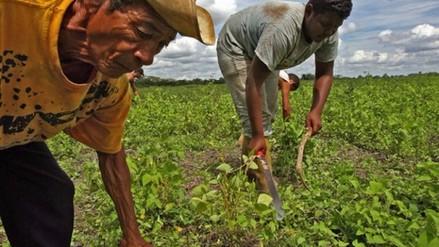 Cambios en la alimentación provocarán 500.000 muertes en 2050, según estudio