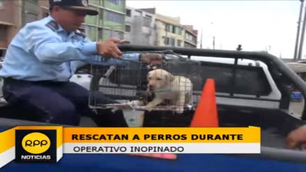 Trujillo: realizan operativo contra la venta ilegal de mascotas