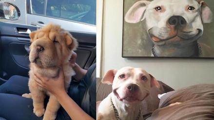 Twitter: cuenta recopila las escenas más graciosas protagonizadas por mascotas