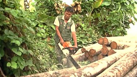 Así está el Perú: 80% de exportaciones de madera tienen procedencia ilegal