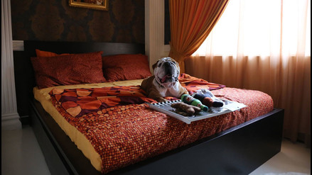 Facebook: mira las instalaciones de este lujoso hotel para mascotas