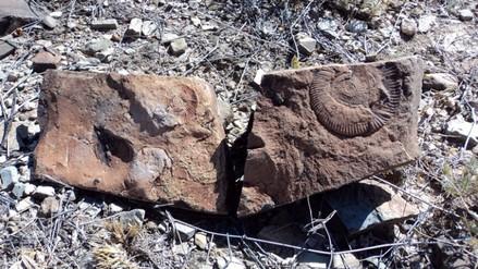 Descubren fósiles de hasta 95 millones de años en México