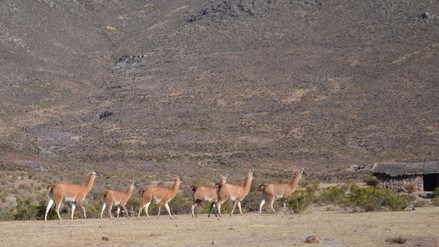 Virú: pretenden declarar destino turístico Reserva Nacional de Calipuy