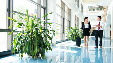 ¿Por qué las oficinas de trabajo deben tener plantas verdes?