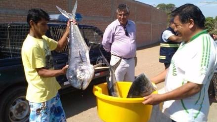 Regalan 500 kilos de perico tras decomisar pescado en Huacho