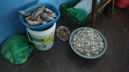Chiclayo: decomisan 50 kilos de pescado no apto para consumo