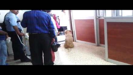 VMT: captan a perro en hospital María Auxiliadora