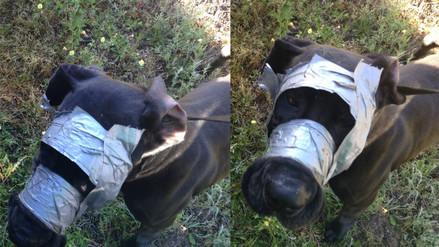 Facebook: policías rescatan a perro que tenía la cabeza cubierta con cinta