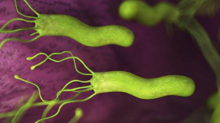 Microbios causan mayoría de cánceres en países pobres