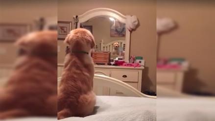 Facebook: un perro se mira en el espejo y esta es su reacción