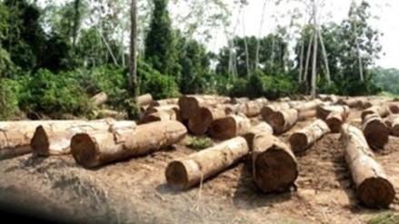 Detienen a 19 miembros de banda dedicada a la tala ilegal en Lima y Ucayali