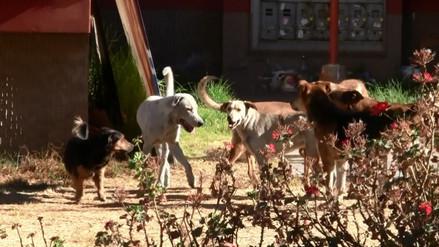 Dos nuevo casos de rabia canina se reportaron en Arequipa