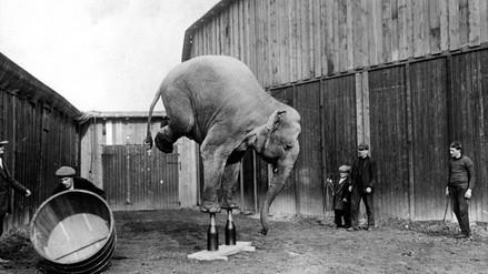 11 increíbles e inquietantes fotos de los circos del siglo pasado