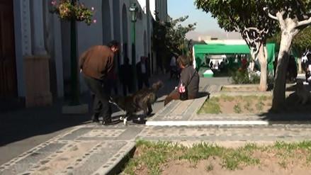 Canes callejeros atacan a transeúntes en el Centro Histórico