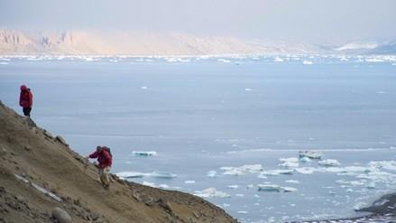 Recogen una tonelada de huesos de dinosaurios y fósiles de la Antártida