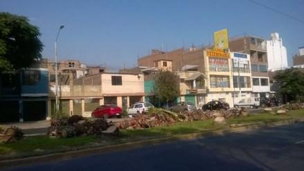 Municipios de Lima y Los Olivos se culpan por tala de palmeras