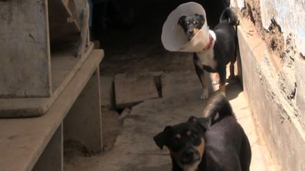 Hermanos se enfrentaron y evitaron recuperación de perritos en mal estado