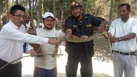 Pobladores capturan a serpiente cascabel que era un peligro para escolares