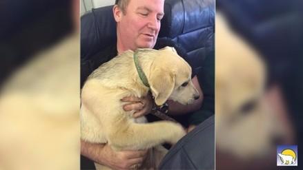 Aerolínea canadiense permite viajar con mascotas a sus pasajeros