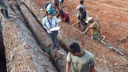 Ashaninkas impiden extracción de madera ilegal